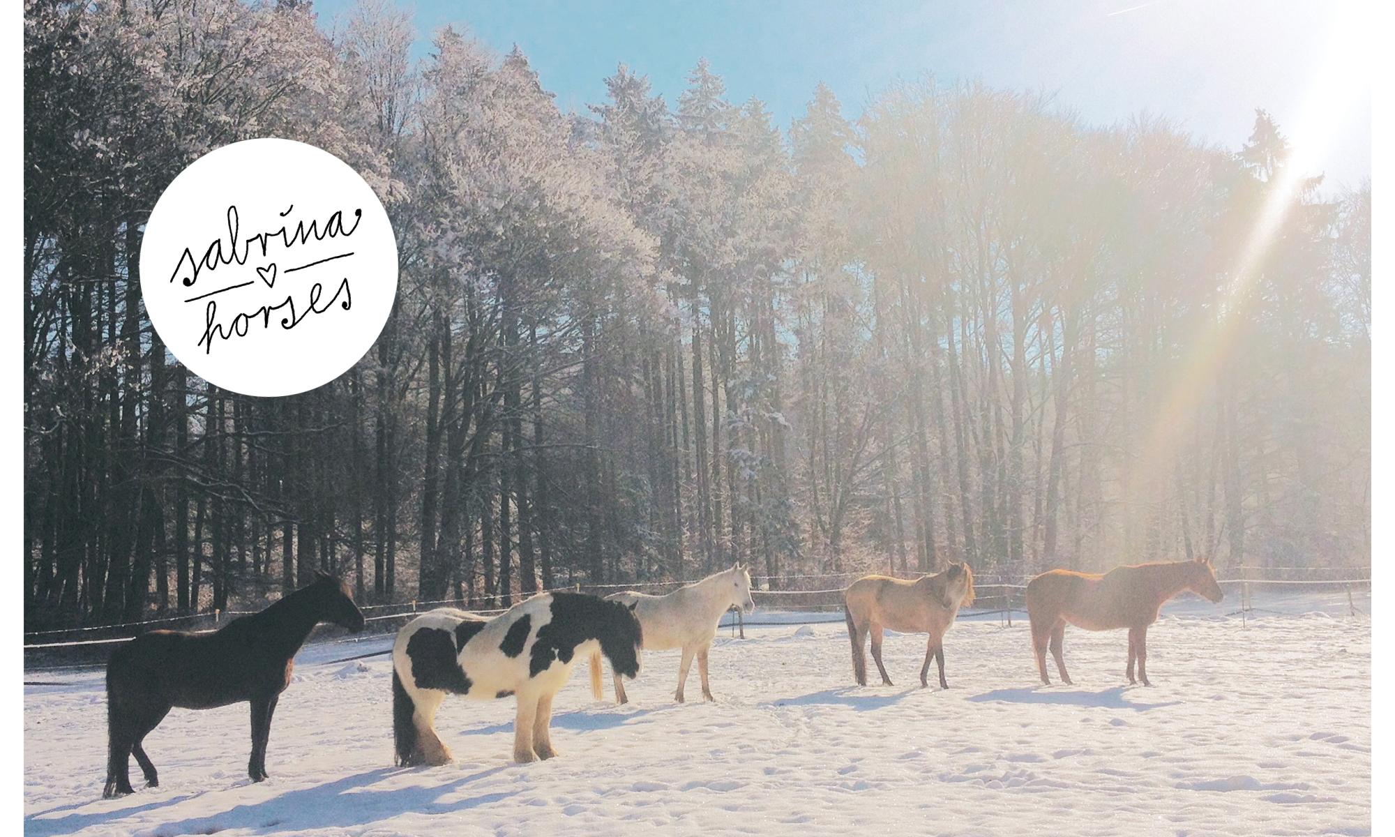 sabrina loves horses