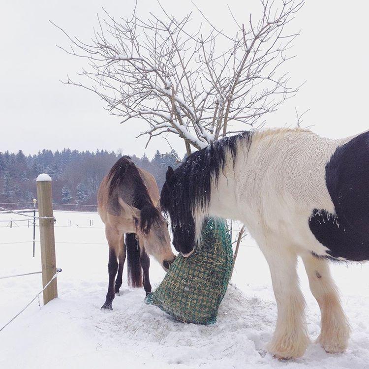 brinaloveshorses.com Freies Lernen mit Pferden. Liberty with horses.