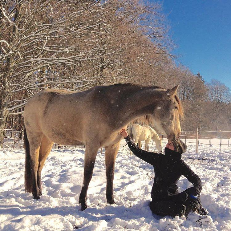 sabrinaloveshorses.com Freies Lernen mit Pferden. Liberty with horses.